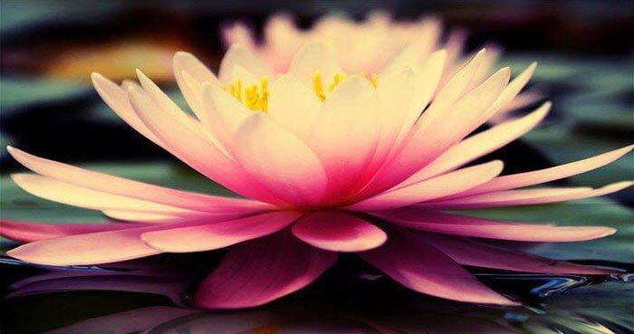 We cannot grow a lotus without mud.